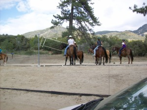 Sometimes horses need to do some recreational activities, like volleyball.